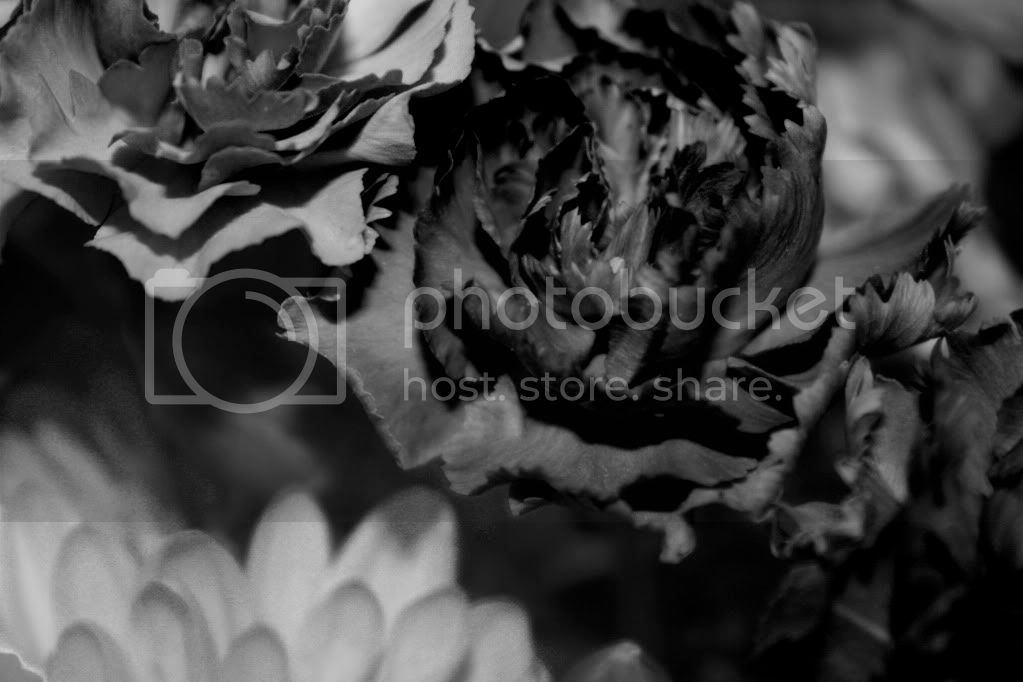 black and white flowers Pictures, Images and Photos